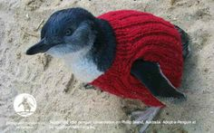 Australian plea to knitters to make pullovers to aid oil-smeared penguins - Telegraph