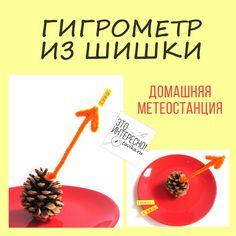 гигрометр из шишки