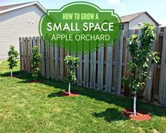 How To Urban Garden How to Grow a Small Space Apple Orchard with Urban Apples - Fruit Garden, Garden Trees, Vegetable Garden, Compost, Apple Orchard, Small Farm, Organic Vegetables, Urban Farming, Trees And Shrubs