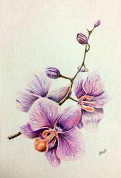drawing, colored pencils, orchid, рисунок, цветные карандаши, орхидея, цветок