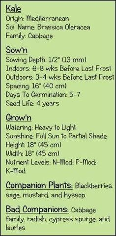 Learn to grow kale.  Watering kale. Fertilizing kale.  Planting kale.