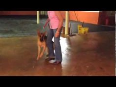 ▶ Chaos to Calm Leash Reactive Dog - YouTube  this is a typical client that we see on a daily basis with a leash reactive dog and it usually only takes a few minutes to get incredible results as you can see Jeff Gellman  Solid K9 Training 401-527-6354