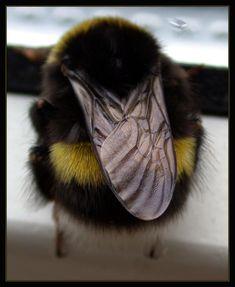 A Bumblebee Visit by Lejonlurv on DeviantArt