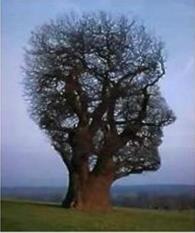 나무의 뇌