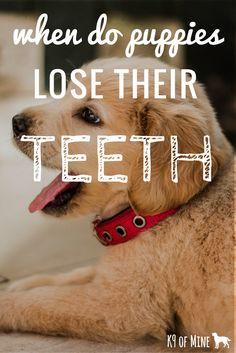 Kids were scared. Charlie started losing teeth. Puppies