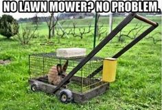Funny pictures about Eco-Friendly Mower. Oh, and cool pics about Eco-Friendly Mower. Also, Eco-Friendly Mower photos. Jokes Photos, Funny Photos, Humor Grafico, Lawn Care, Inventions, Funny Animals, Odd Animals, Farm Animals, Funny Jokes
