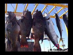 TURISMO EN CHIHUAHUA ¿En dónde se lleva a cabo el Serial de Pesca Deportiva? Este evento se realiza en diferentes municipios del estado, y pretenden reunir a por lo menos 300 competidores, acompañados de sus familias en el transcurso de 5 torneos en total. www.turismoenchihuhahua.com