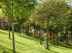 Parc des Loges à Évry - Colline plantée d'arbres