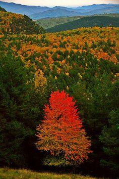 Autumn landscape, Vrancea, Romania www.romaniasfriends.com