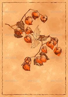 Autumn Background with Orange Physalis #GraphicRiver Vector sketch of the branch of orange physalis on a textured grunge autumn background. P