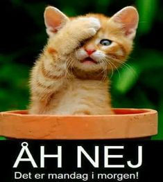 Ah no it's Monday morning! Kittens And Puppies, Cute Kittens, Beautiful Cats, Animals Beautiful, Animals And Pets, Funny Animals, Pet Dogs, Dog Cat, Maine Coon