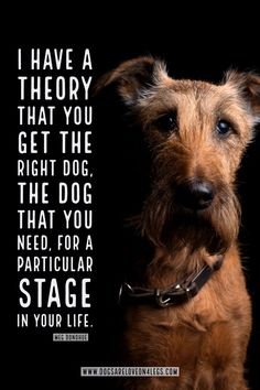 Dog Quote I Have A Theory That You Get The Right Dog