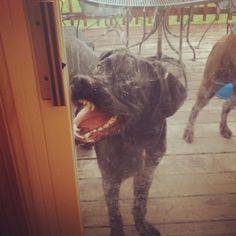 <b>OK, who broke the dog?</b>