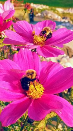 Bees in Autumn