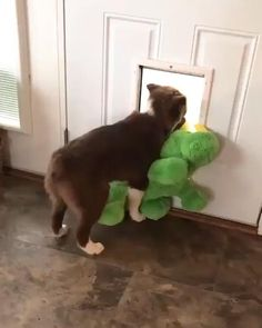 Funny Dog Videos, Funny Dogs, Cute Dogs, Funny Farm, Cute Animal Videos, Funny Animal Pictures, Cute Funny Animals, Cute Baby Animals, Gato Gif