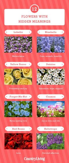 12 Flowers and Their Meanings - Valentine's Day Flower Color Symbolism - Country Living Yellow Roses, Red Roses, Colorful Flowers, Beautiful Flowers, Tropical Flowers, Small Flowers, Color Symbolism, Flower Meanings, Flowers And Their Meanings