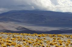 "Gregor Samsa posted a photo:  The Altiplano (Spanish for ""high plain""), Andean Plateau or Bolivian Plateau, in west-central South America, where the Andes are at their widest, is the most extensive area of high plateau on Earth outside Tibet. The bulk of the Altiplano lies within Bolivian and Peruvian territory while its southern parts lie in Chile and Argentina.  The Altiplano plateau hosts several cities like El Alto, La Paz, Puno, Oruro, Potosí, and Cuzco. The northeastern Altiplano is…"