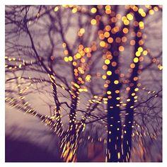 Christmas Lights - Leda in Lights - Original Fine Art Photograph by Tina Crespo via Etsy. Purple Christmas, Christmas Wall Art, Christmas Home, Christmas Lights, Holiday Lights, Purple Wall Art, Purple Walls, Pretty Lights, Beautiful Lights