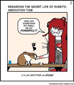 Medication time for bunny. Regarding the secret life of rabbits.