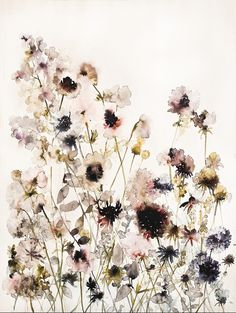 Lourdes Sanchez - Anemones, field watercolor and ink on paper 29¨x40¨
