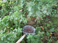 Avec le ramasse-noix, on peux ramasser les noix, même dans les orties, sans problèmes.