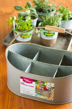 "Easy Indoor Herb Garden -- I was an indoor container gardening failure, until I decided a different approach was in order. Find out how you can create this simple indoor herb garden in under 10 minutes! | via <a href=""/unsophisticook/"" title=""Tara Kuczyko (indoor gardening)"