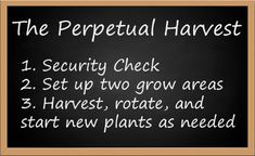 Learn the 3 steps to creating your own perpetual harvest. View full article: http://www.growweedeasy.com/the-perpetual-harvest