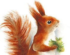 Red Squirrel watercolor painting - Art Print. Nature or Animal Illustration…