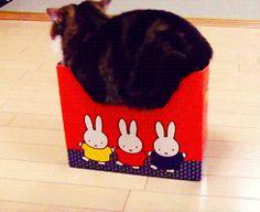 Cat + box = #fail (gif)