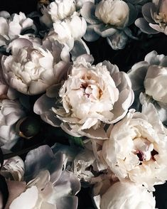 beautiful flowers wallpapers Lots of good stuff happening this weekend.