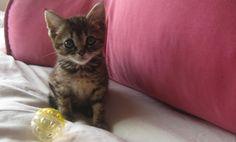 Kitten Masters Sad Face–Caption This Cute Photo!