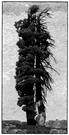 The Society of Wood Engravers Gallery 10