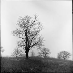 Though this was taken on black & white film, the actual scene wasn't much more colorful. A very dreary winter day. This is my favorite from that day.  Self-developed; Kodak Tri-X 400 in Kodak TMAX.