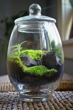 Old man in terrarium going for a walk..