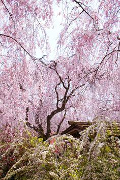 Haradani-en Garden, Kyoto, Japan 原谷苑