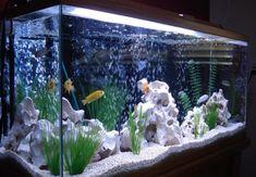 21 Best Aquascaping Design Ideas to Decor Your Aquarium - Tips Inside - homelovers - fresh water fish tank Cichlid Aquarium, Aquarium Design, Aquarium Cichlidés, Klein Aquarium, Tropical Fish Aquarium, Tropical Fish Tanks, Aquarium Lighting, Saltwater Aquarium, Unique Fish Tanks