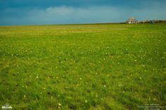 Цветущие поля в Новоузенском районе Саратовской области Фото Юлия Сидорчева      #Саратов #СаратовLife