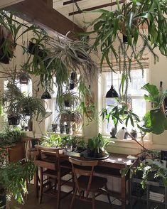 自分が使ってるタグの中で #indoorjungle のタグが1番気に入ってます。 #indoorplants #houseplants #植物 #ビカクシダ #コウモリラン #チランジア #tillandsia #エアープランツ #エアプランツ #airplants #蘭 #オーキッド #orchid #シダ #アンティーク #インテリア #staghornferns #platycerium #indoorgarden #greenhouse #plantlife #livingwithplants
