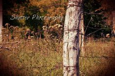 Fenced in - Shutter Photography Shutter Photography, Shutters, Fence, Plants, Blinds, Shades, Window Shutters, Plant, Exterior Shutters