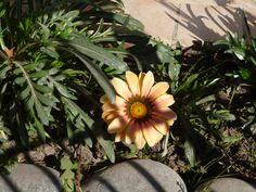 EVBJUAN   Especie peremne  , GERBERA , varios colores muy vivos , predominan los naranjas. Berutti --Brandsen Plants, Orange, Colors, Planters, Plant