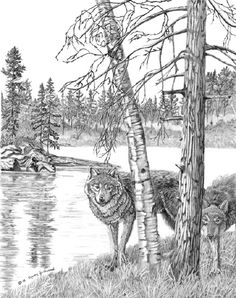 Wolves, Bears and All Sort of Things... - http://www.moillusions.com/wolves-bears-and-all-sort-of-things/