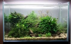Layout by Spin0ff. #aquascaping