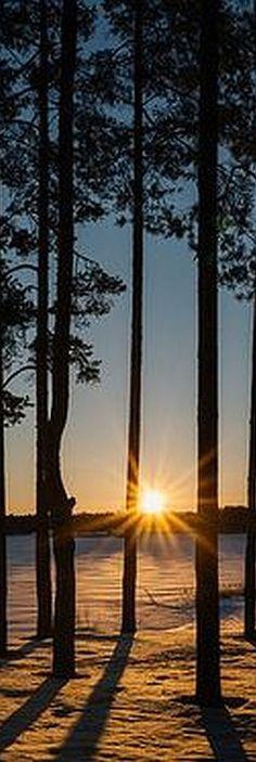 AMAZING FOREST SUNSET SHOT   Foto von mr. Wood von Flickr