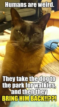 Best Cat Memes, Funny Dog Memes, Funny Animal Memes, Cute Funny Animals, Funny Dogs, Cute Cats, True Memes, Silly Cats, Cats And Kittens
