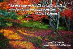 ) Albert Camus, Country Roads