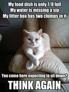 This is my cats attitude everyday.#cat #humor #cats =^..^= www.zazzle.com/kittyprettygifts