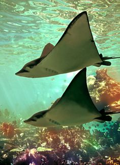 I keep having dreams about snorkeling in the bahamas...