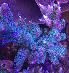1464 best marine fish tanks images marine fish tanks coral reefs