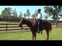 How To Gain, Maintain, And Direct Your Horse's Attention | Carson James