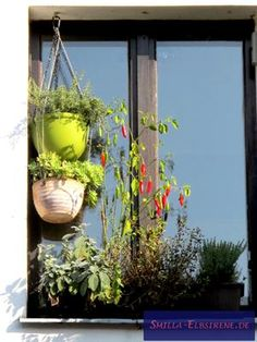 Gemüsefenster Plants, Shadows, Windows, Lawn And Garden, Plant, Planets